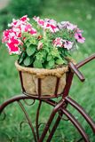 Decorative Vintage Model Old Bicycle Equipped Stock Photography