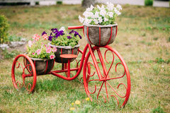 Decorative Vintage Model Old Bicycle In Flowers Garden stock photos