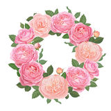 Decorative vintage pink roses and bud with leaves in round shape. Stock Photo