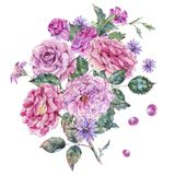 Decorative vintage watercolor pink roses Botanical colorful illustration Stock Photos