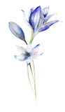 Decorative Violet flowers. watercolourillustration Stock Photos