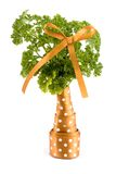 Decorative vitamin tree. Parsley in the form of a tree, decorated by a bow and lacing. On the isolated white background Royalty Free Stock Photo