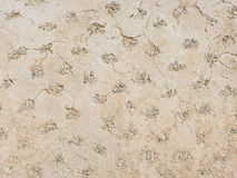 Decorative wall made of plaster and gravel Stock Photos