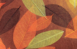Decorative wall-paper Stock Images