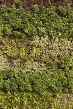 Decorative wall of plants close up Royalty Free Stock Photos