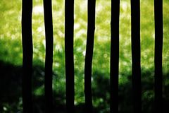 ABSTRACT OF LIGHT ON GRASS THROUGH POLE FENCE Stock Photography