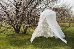 Decorative wedding arch around a flowering tree Royalty Free Stock Photos