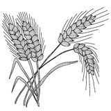 Decorative wheat Royalty Free Stock Image