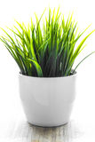 Decorative wheatgrass plant in white flower pot Stock Image