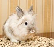 Decorative white Rabbit Stock Images