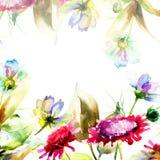 Decorative wild flowers Royalty Free Stock Image