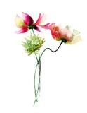 Decorative wild flowers Stock Photo