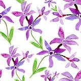 Decorative wild flowers, watercolor illustration Stock Image