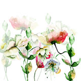 Decorative wild flowers.  watercolour illustration Stock Photo