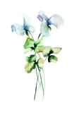 Decorative wild flowers. watercolourillustration Stock Images