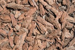 Natural background of pine chips. royalty free stock photography