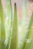 Decorative yucca plant. Stock Image