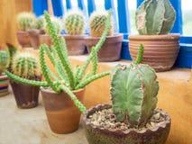 Decorazione alta vicina del cactus in giardino Fotografia Stock