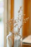 Decorazione asciutta della casa del fiore Fotografia Stock