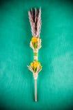 Decorazione asciutta delle piante Fotografie Stock