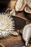 Decorazione asciutta naturale dei fiori. Clos del materiale dei potpourri Immagine Stock