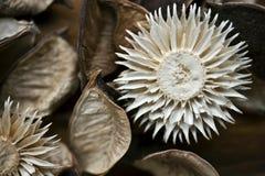 Decorazione asciutta naturale dei fiori. Primo piano del materiale dei potpourri Immagini Stock Libere da Diritti