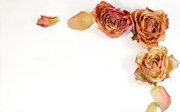 Decorazione astratta - rose e petali secchi per la lettera, sito Web Immagine Stock Libera da Diritti
