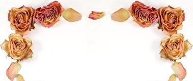 Decorazione astratta - rose e petali secchi per la lettera, sito Web Immagine Stock