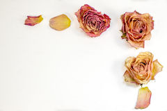 Decorazione astratta - rose e petali secchi per la lettera, sito Web Fotografia Stock Libera da Diritti