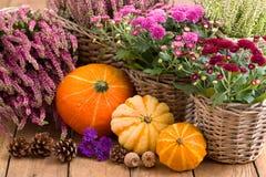 Decorazione autunnale con i fiori e le zucche Immagini Stock Libere da Diritti