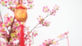 Decorazione cinese del nuovo anno sull'albero del fiore video d archivio