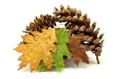 Decorazione d'autunno Fotografie Stock Libere da Diritti