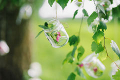 Decorazione dal barattolo con il fiore che appende sul primo piano dell'albero Immagine Stock