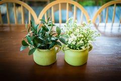 Decorazione dei fiori della margherita sulla tavola di legno Immagine Stock Libera da Diritti