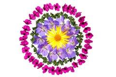 Decorazione del fiore Fotografie Stock