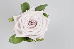 Decorazione del fiore di Rosa Fotografia Stock