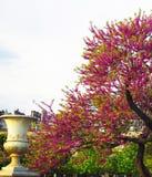 Decorazione del giardino di Tuileries a Parigi, Francia immagine stock libera da diritti