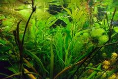 Decorazione dell'acquario Fotografie Stock Libere da Diritti