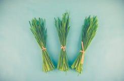 Decorazione dell'erba della primavera Fotografia Stock