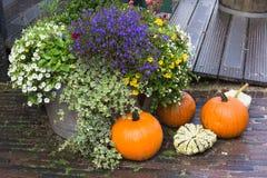 Decorazione dell'iarda di caduta con le zucche ed i fiori Immagini Stock Libere da Diritti