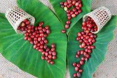 Decorazione dell'interno, chicco di caffè, arte di idea del caffè Immagine Stock Libera da Diritti
