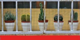 Decorazione della finestra con i fiori fotografia stock