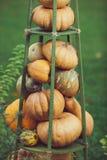 Decorazione della natura delle zucche Fotografia Stock