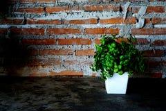 Decorazione della parete Fotografie Stock