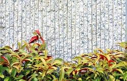 Decorazione della pianta Fotografia Stock Libera da Diritti