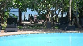 Decorazione della piscina con il fiore tropicale di plumeria del frangipane con la vista del mare sui precedenti Movimento lento stock footage