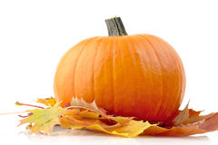 Decorazione della zucca con le foglie di autunno per il giorno di ringraziamento su bianco Fotografia Stock
