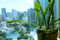 Decorazione delle piante fotografie stock libere da diritti