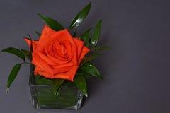 Decorazione delle rose su fondo grigio Immagine Stock