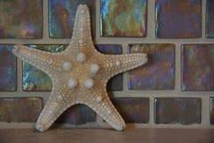 Decorazione delle stelle marine Fotografia Stock Libera da Diritti